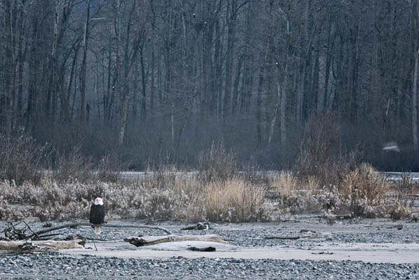 photo of Eagle on