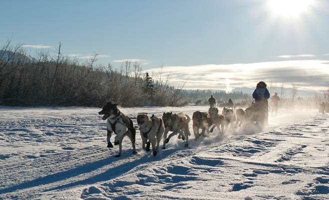 dog team sets out at