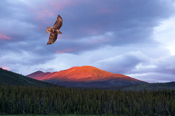 photo: The Hawk and the Sunset