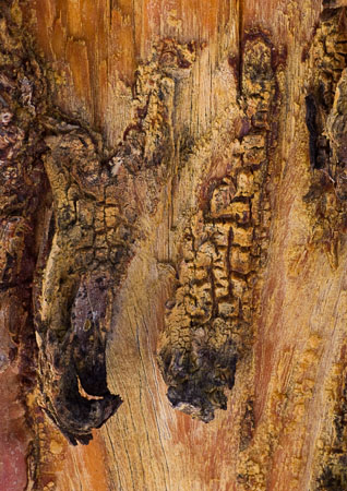 Close-up of scarred tree trunk